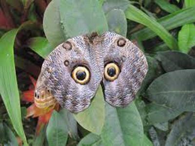Butterfly eyes 400