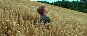 Chris in wheat b 300