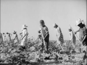 Field workers 300