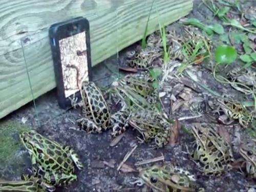 Frog tv 500